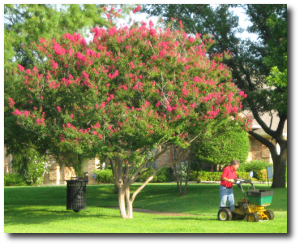 Professional Lawn Care Service in Corinth, TX