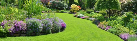 The Importance of Lawn Pest Control For a Healthy Lawn