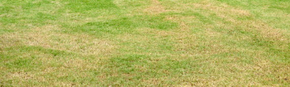Save a Dying Lawn: What to Know About Lawn Drought Care